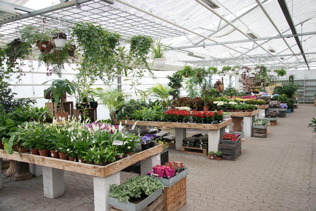 plantning i kapilærkasser